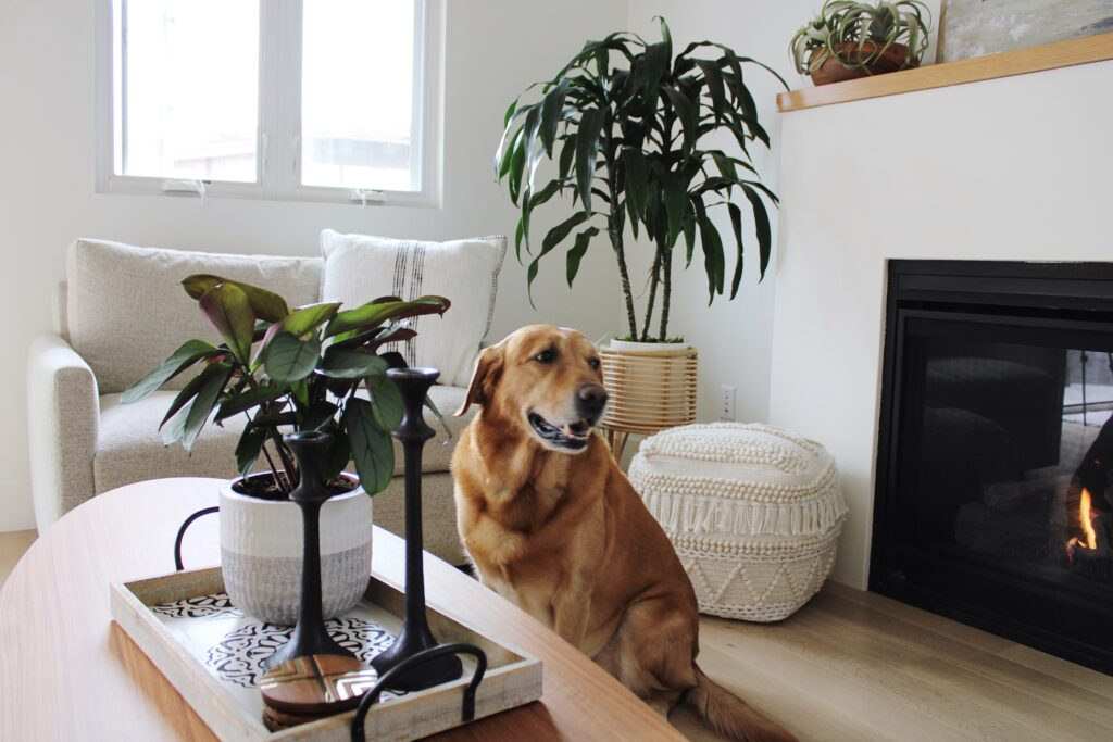 Koda Interiors Blog features tips, tricks and ideas to make your house a home and sanctuary.